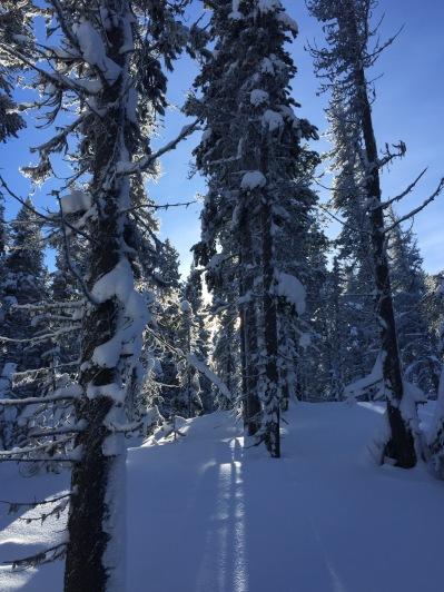 Apex Mountain fluffy snow