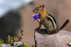 flower from squirrel