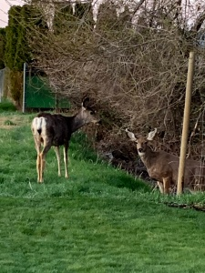 Deer in my neighborhood all the time, and I like that